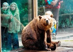 Bruine beer en kinderen