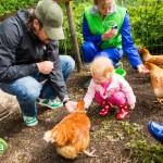Beleef het boerenleven tijdens de Campina Open Boerderijdagen