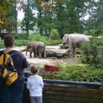 Succesvol jaar voor dierentuinen