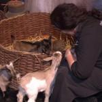 Dierenverhuur in het verdienmodel