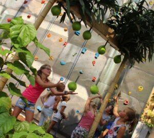 spel: kokosnoot vangen in het tropische bos