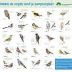 Vogelherkenningskaart voor groene kampeerders