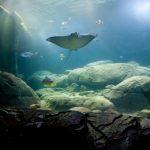 Top aquariumwereld komt vijf dagen naar Burgers Zoo