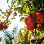 In Voedselbossen komen natuur, landbouw en recreatie bij elkaar