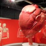 ANWB kids verkiezen Continium tot leukste museum