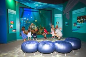 Rifaquarium in het Dalton Discovery Centrum