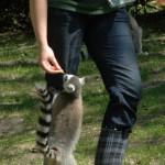 Bezoek aan dierentuinen daalde met 7% in 2010