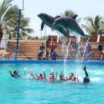 Nederlanders dromen over vakantie-avontuur met dieren