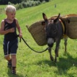 Ezelgasterij Aan de Maasheggen leukste plattelandsbedrijf van 2011