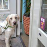 Geleidehonden nog lang niet overal welkom