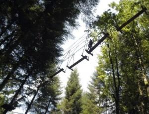 Klimparcours door de Veluwse boomkruinen