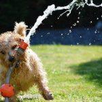 Honden – en slecht luisterende baasjes