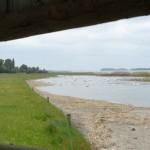 Méér natuur, maar minder groene ruimte in Nederland