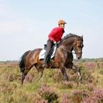 Regio's zien kansen in paardentoerisme