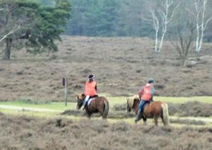 paard en natuur
