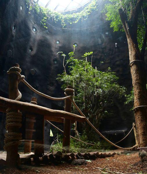 nieuw gorillaverblijf van 11 miljoen voor pairi daiza