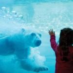 Het gedrag van de dierentuinbezoeker in beeld