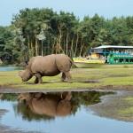 Recordmaand voor Safaripark Beekse Bergen in augustus