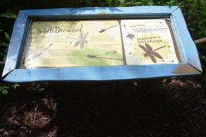 informatie over de libelle