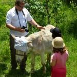Nieuw record voor internationaal toerisme in eerste helft 2011
