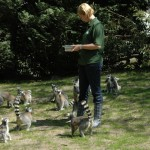 Nominaties leukste dierentuin bekend voor de ZooSite Award