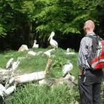 Dierenpark Wissel, Zoo Parc Overloon en Aqua Zoo Friesland failliet