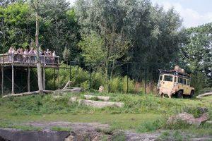 Leeuwenverblijf in Zoo Parc Overloon