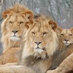 Zooparc Overloon investeert in groei